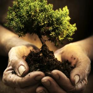Quando il Blog non inquina l'ambiente