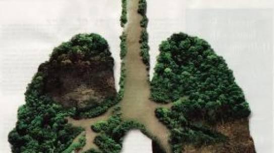 Salvare le foreste è una garanzia di vita per il mondo
