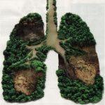 deforestazione-pic.jpg